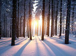Les, stromy a urbaristi v zime
