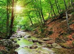Lesy spadajúce pod urbárov Dolný Kubín